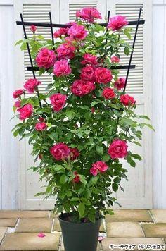 New rose garden design layout outdoor spaces 47 Ideas Container Herb Garden, Container Gardening Vegetables, Beautiful Roses, Beautiful Gardens, Rose Garden Design, Dubai Miracle Garden, Magic Garden, House Plants Decor, Easy Garden