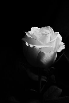 Black and White Beach Photography: Guide Take Better Photos – B & W Photography ltd Black And White Roses, Black And White Beach, Black And White Wallpaper, Black And White Aesthetic, Flower Phone Wallpaper, Flower Wallpaper, Dark Photography, Black And White Photography, White Picture