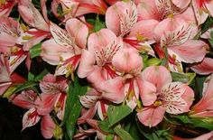 Hd Backgrounds, Close Up, Bouquet, Lily, Lilies Flowers, Wallpaper, Plants, Bouquet Of Flowers, Wallpapers