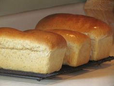 Homemade Wheat Sandwich Bread: A Complete Guide | Thriving Home