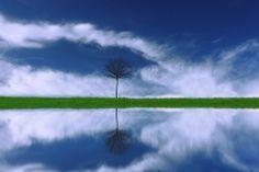 Reflection - Sinan Cansız