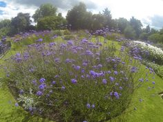 This beautiful park in my 'hood of Harlesden, North-west London, also has a great cafe and a pop-up garden centre. #GoProHero3BE © Steve Swindells 14. 7. 16.