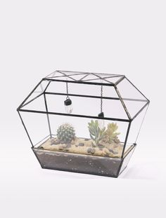 or this for a craft project, home for hermit crabs?