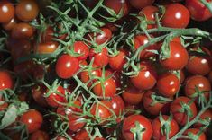 Keříčková rajčata Vegetables, Food, Composters, Vegetable Recipes, Eten, Veggie Food, Meals, Veggies, Diet