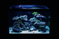 Ridsters Marineland 70g Cube Build - Page 2 - Reef Central Online Community