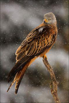 Gorgeous hawk!