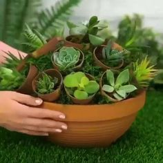 Plant Hacks, Plants, Succulents Diy, Succulents, Diy Garden Projects, Diy Plants, Succulent Pots, Container Gardening, Perfect Plants