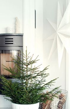 Christmas tree and white star, simple but so lush