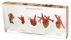 Comparative Hearts