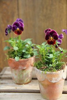 Creative spring garden pots and planters to inspire you right into spring. Perfect for your porch or on your table, these combinations are easy and beautiful. Spring Garden, Winter Garden, Container Plants, Container Gardening, Plant Containers, Beautiful Gardens, Beautiful Flowers, Exotic Flowers, Colorful Flowers