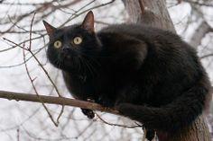 Фото животных » Маленькая охотница