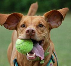 Get a jump-start on  everything you need to know about doggie dental care here.