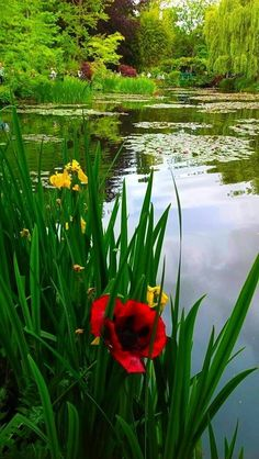 Down by the pond Beautiful World, Beautiful Gardens, Beautiful Flowers, Beautiful Places, Beautiful Pictures, White Flowers, Monet Garden Giverny, Pond Life, Lily Pond