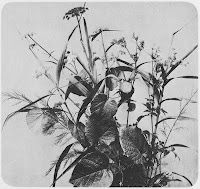 Grasses and wild flowers- Adolphe Braun