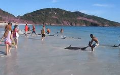 30 Dolphins Were Pushed Ashore on a Beach in Brazil � Watch As The Locals Save Them
