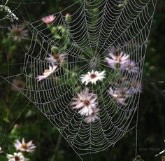 The Intricacy and Beauty of Spider Webs