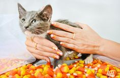 Denise in Halloween Nail Art, Plus Kittens: Learn These Designs with a Dose of Cute | Beauty High