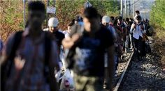 Streams of refugees flow into Macedonia from Greece AUGUST 2015