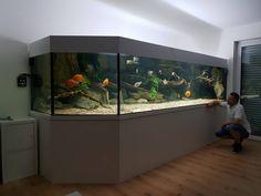 Diskus Aquarium, Biotope Aquarium, Tropical Fish Aquarium, Aquarium Design, Big Fish Tanks, Terrarium Tank, Fish Tank Design, Fish Gallery, Paludarium