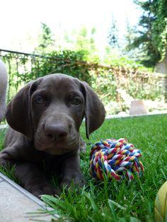 Ronny :) cute puppy