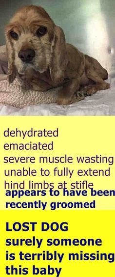 SAFE 1-20-2017 by Abandoned Angels Cocker Spaniel Rescue --- SUPER URGENT Brooklyn Center BONNIE – A1101809  FEMALE, CREAM / WHITE, COCKER SPAN MIX, 10 yrs STRAY – STRAYWOFFS, NO HOLD Reason STRAY Intake condition EXAM REQ Intake Date 01/19/2017  http://nycdogs.urgentpodr.org/bonnie-a1101809/