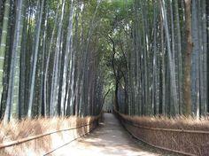 Arashiyama - Kyoto - Reviews of Arashiyama - TripAdvisor. Apparently there is a monkey park here and boating on a lake.