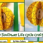 3-D Life Cycle of a Sunflower craft