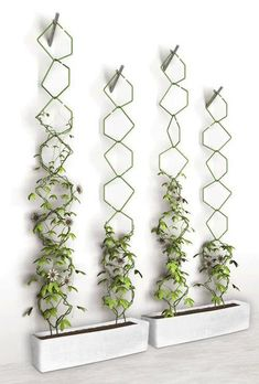 Vertical garden ideas might be