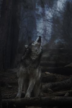 Covered in my cloak, I make my way to the edge of camp where a wolf is waiting for me when I hear you behind me and spin around. (Open rp)