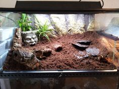 vivarium for tarantula - Google Search