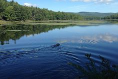 See a map with plotted points for Adirondack lakes, ponds, and reservoirs to help you discover new bodies of water that might be great places for your next paddling trip!
