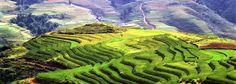 Trek au Vietnam. Les rizières de Sa Pa