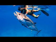 Spearfishing Movie - One Fish Legends - YouTube