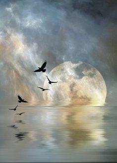 reflection, full moon, incredible light, nature photography ©Stephen Warren
