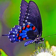 Beautiful blue butterfly
