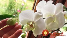 Funguje to aj na staršie rastlinky. Floral, Flowers, Gardening, Van, Pictures, Orchids, Lawn And Garden, Royal Icing Flowers, Vans