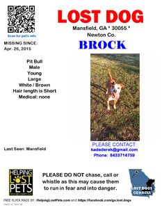 Lost Dog - Pit Bull - Mansfield, GA, United States
