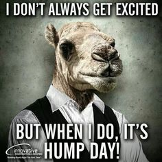 Hump day Hump Day Meme, Hump Day Quotes, Wednesday Hump Day, Wednesday Greetings, Happy Wednesday Quotes, Wednesday Humor, Wacky Wednesday, Wednesday Coffee, Diva Quotes