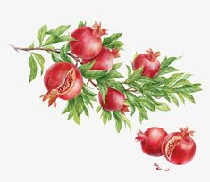 red,fruit,aug fruit,mid-autumn fruits,aug,mid-autumn,fruits,pomegranate clipart