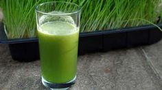 Pšeničná tráva aj proti šedinám: Vypestujte si črepník plný zelene