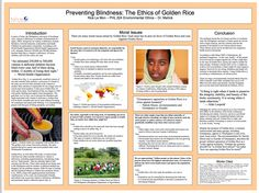 Preventing Blindness: The Ethics of Golden Rice Golden Rice, Environmental Ethics, Infographic, Infographics, Visual Schedules