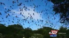 Bracken Bat Cave could be surrounded by 3,800 new homes | News  - Home