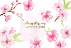 Watercolor Cherry Blossoms by Corner Croft on @creativemarket