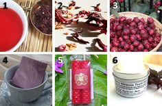 {Food and Gardening} Hibiscus: A Little Red Magic - Eco Etsy
