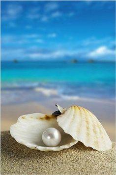 Sea shells in pearl background Pearl Background, Beach Wallpaper, Art Mural, Ocean Waves, Ocean Beach, Beautiful Beaches, Strand, Cute Wallpapers, Sea Shells