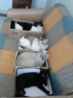 I paid a hundred dollars for a used sofa to make my cats comfortable, but all they really wanted was their own EMPTY CARDBOARD BOX.  Lesson learned ♥