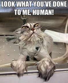 funny pictures of cats ~OMG! That cat!~