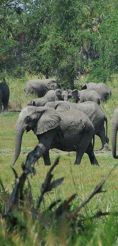 Ghana Nature