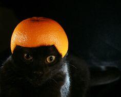 15 cats wearing fruit helmets
