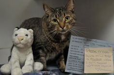 """Sometimes you just need a friend. A post-it on Mannie's cage reads, """"Please make sure I always have my tiger with me. I am scared without him. Love, Mannie.""""  Mannie is available for adoption at the New Hampshire SPCA, in Stratham, NH www.nhspca.org"""